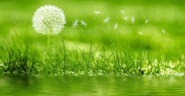 Hoa bỠcông anh mang ý nghĩa của sự tự do