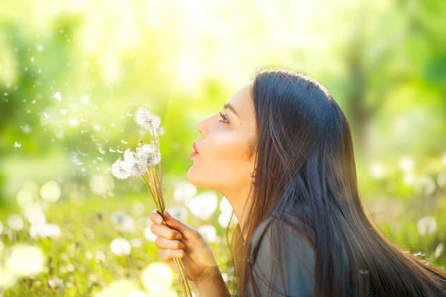 Hoa bá» công anh giúp cải thiá»n chức nÄng gan